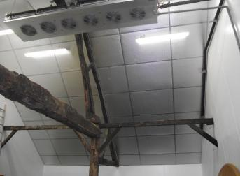 Plafond pour sous toiture